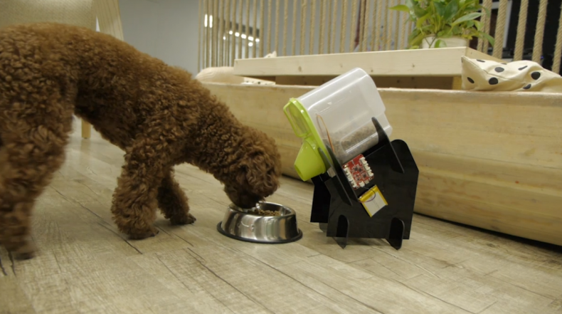 How to feed your pets when you're not home
